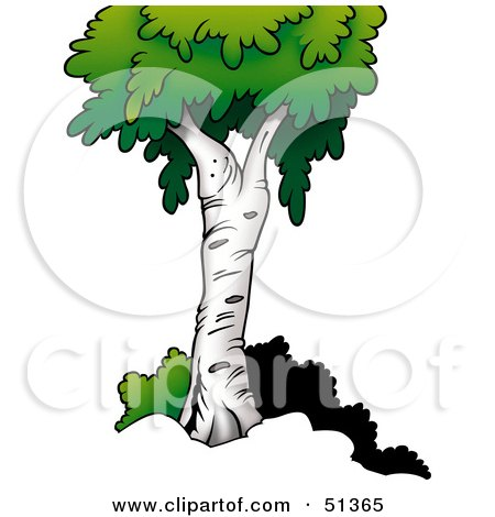 Royalty-Free (RF) Birch Tree Clipart, Illustrations, Vector ...