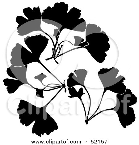 Royalty-Free (RF) Clipart Illustration of a Digital Collage of Silhouetted Ginkgo Biloba by dero