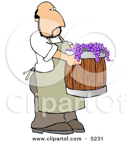 Man Harvesting Wine Grapes Clipart by djart