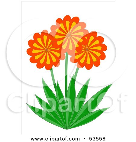 Royalty-Free (RF) Clipart Illustration of Three Orange And Yellow Spiral Daisy Flowers With Green Leaves by David Barnard