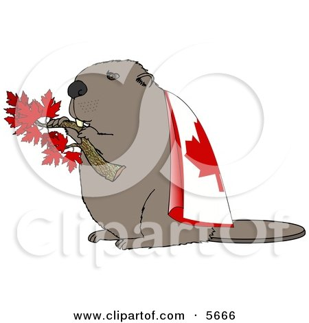 Canadian Beaver Holding Maple Tree Branch and Wearing Canada Flag Clipart Illustration by djart