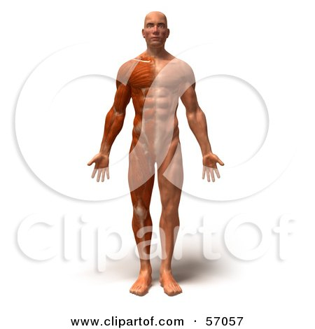 57057 Royalty Free RF Clipart Illustration Of A 3d Muscle Male Body Character Facing Front Version 1 adrianne curry against kendra wilkinson