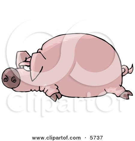Fat Pink Pig Laying On the Ground Posters, Art Prints