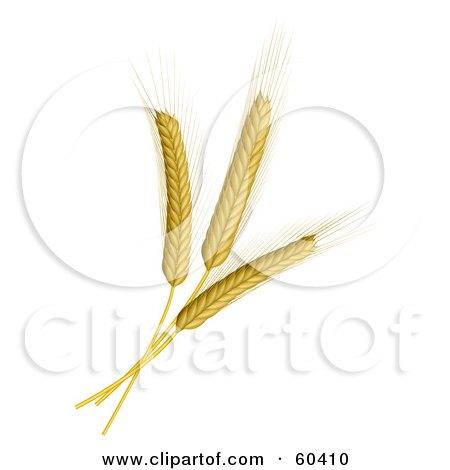 Three Wheat Stalks Posters, Art Prints