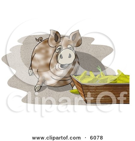 Pot-bellied Pig Beside a Feeding Container Full of Corn Cobs Clipart Picture by djart
