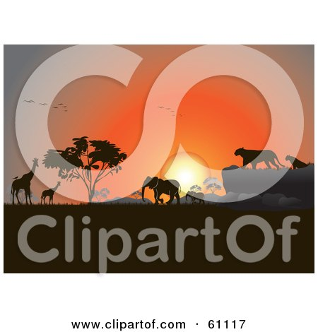 Royalty-free (RF) Clipart Illustration of Silhouetted Giraffes, Birds, Elephants And Big Cats Against An Orange African Sunset by pauloribau