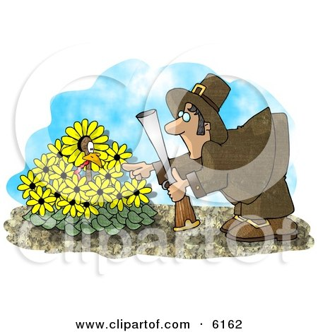 Wild Turkey in a Yellow Daisy Patch, Hiding From a Pilgrim With a Gun Clipart Picture by djart