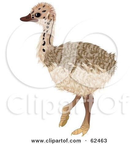 Cute Baby Ostrich Bird Posters, Art Prints