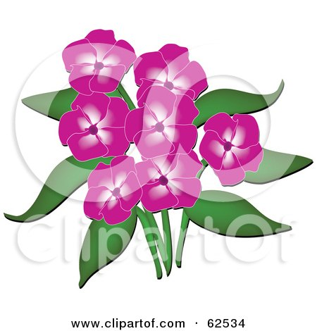 Royalty-Free (RF) Clipart Illustration of a Beautiful Pink Phlox Flowers And Green Leaves by Pams Clipart