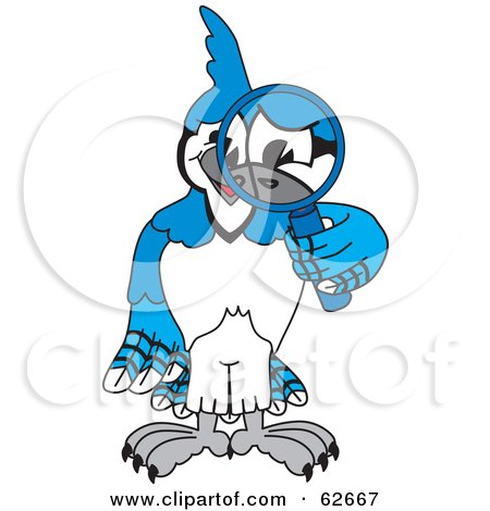 Royalty-Free (RF) Clipart Illustration of a Blue Jay Character School Mascot Using a Magnifying Glass by Toons4Biz