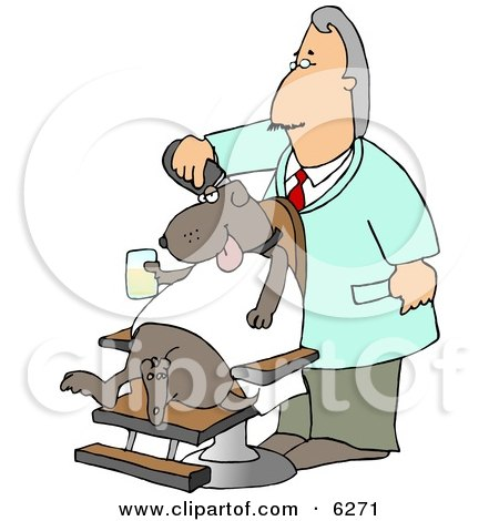 Male Dog Groomer Grooming A Dog With A Razor While He Sits In A Chair ...