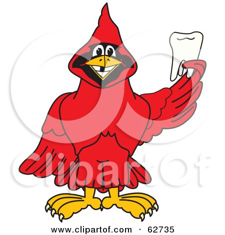 Royalty-Free (RF) Clipart Illustration of a Red Cardinal Character School Mascot Holding a Tooth by Toons4Biz