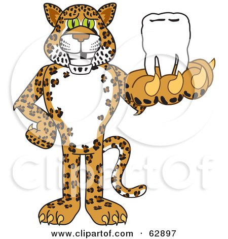 Royalty-Free (RF) Clipart Illustration of a Cheetah, Jaguar or Leopard Character School Mascot Holding a Tooth by Toons4Biz