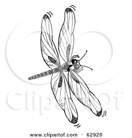 Free Dragonfly Clipart Black And White Black And White Dragonfly