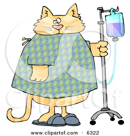 Orange Tabby Cat With an IV Dispenser in a Hospital Posters, Art Prints