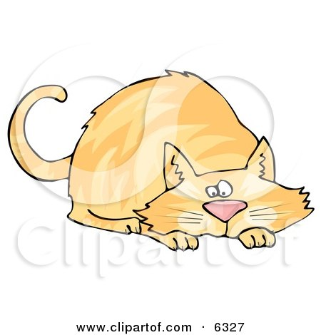 Orange Cat Crouching While Preparing to Pounce on Something Posters, Art Prints