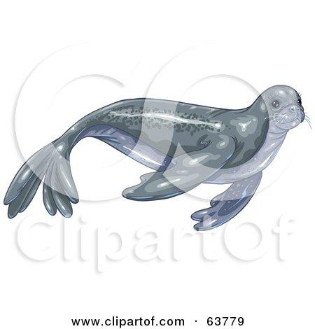 Gray Swimming Seal Posters, Art Prints