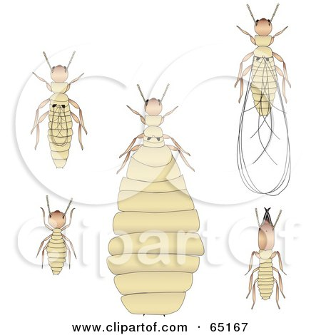Royalty-Free (RF) Clipart Illustration of a Digital Collage Of Termites by Dennis Holmes Designs