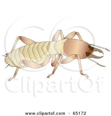 Royalty-Free (RF) Clipart Illustration of a Crawling Termite by Dennis Holmes Designs