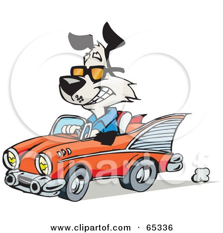 Royalty-Free (RF) Clipart Illustration of a Black And White Dog Driving A Classic Convertible Car by Dennis Holmes Designs