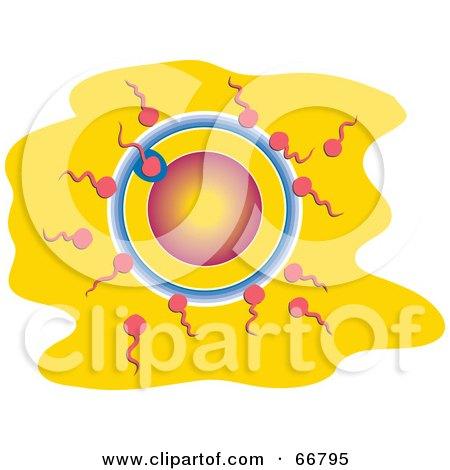 Royalty-Free (RF) Clipart Illustration of Sperm Fertilizing an Egg by Prawny