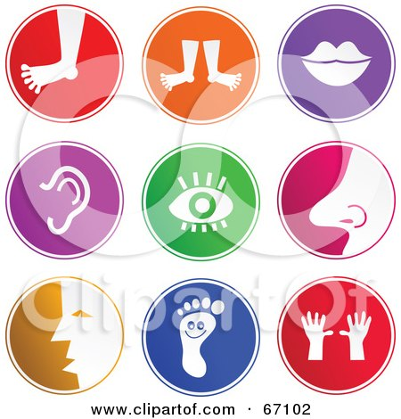 Royalty-Free (RF) Clipart Illustration of a Digital Collage Of Round Colorful Anatomy Buttons by Prawny