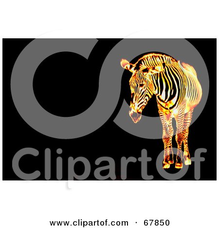 Royalty-Free (RF) Clipart Illustration of a Fiery Zebra On A Black Background With Text Space by Arena Creative