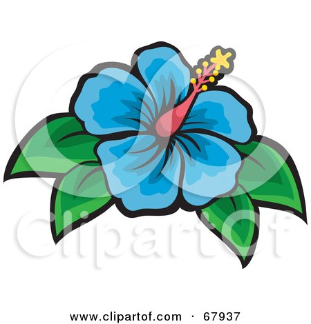 Beautiful Blue Hibiscus Flower With Green Leaves Posters Art Prints