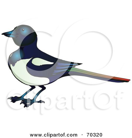 Royalty-Free (RF) Clipart Illustration of a Magpie Bird With A Colorful Tail by Snowy