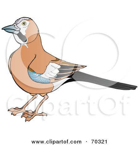 Royalty-Free (RF) Clipart Illustration of a Brown Jay With Blue, Black And White Markings On Its Wings by Snowy