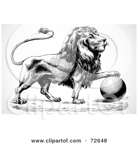 Royalty-Free (RF) Clipart Illustration of a Black And White Lion Resting Its Paw On Top Of A Ball by BestVector