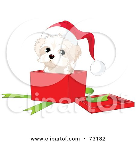 Royalty-Free (RF) Clipart Illustration of a West Highland White Terrier Puppy Wearing A Santa Hat And Popping Out Of A Christmas Gift Box by Pushkin