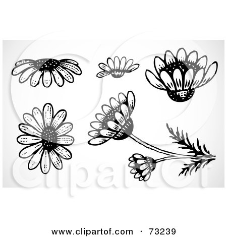 Royalty-Free (RF) Clipart Illustration of a Digital Collage Of Black And White Daisy Flower Elements by BestVector