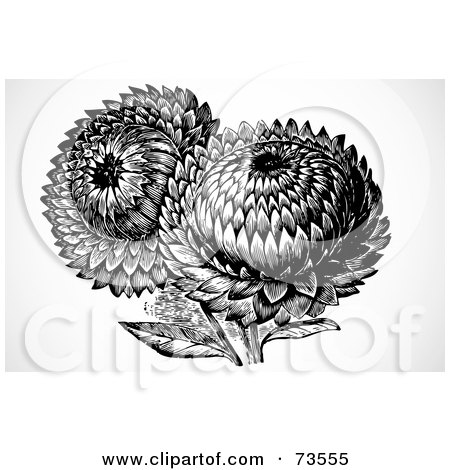clipart picture of black and white sunflowers, on a white background.