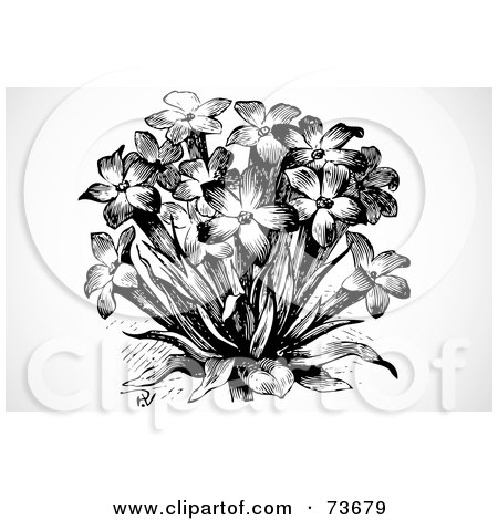 Flower Bouquet Black And White Black And White Bouquet of