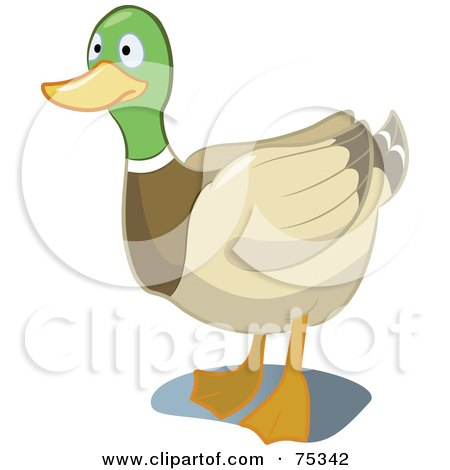 Royalty-Free (RF) Clipart Illustration of a Mallard Duck Staring by Frisko