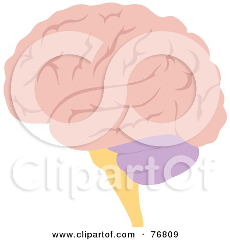 Royalty-Free (RF) Clipart Illustration of a Pink Human Brain by Rosie Piter