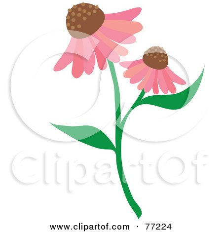Stem With Two Pink Echinacea Coneflowers Posters, Art Prints