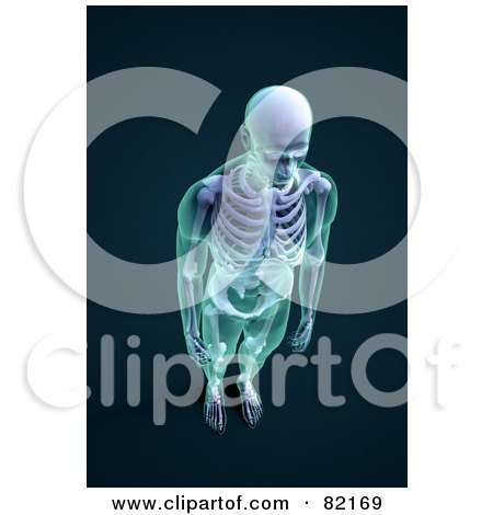 Royalty-Free (RF) Clipart Illustration of a 3d Male Skeleton With Transparent Skin, Aerial View On Dark Blue by Mopic