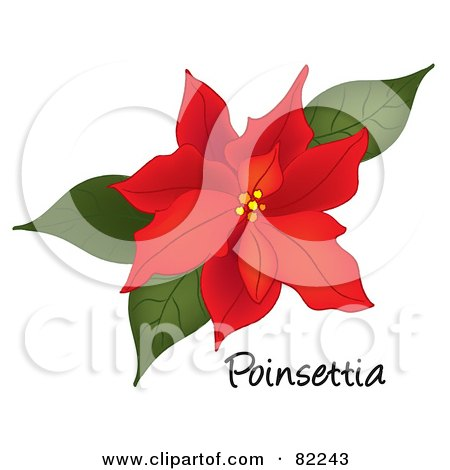 Royalty-Free (RF) Clipart Illustration of a Red Poinsettia Bloom ...