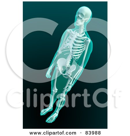 Royalty-Free (RF) Clipart Illustration of a 3d Human Skeleton Xray by Mopic