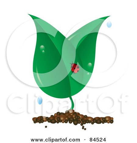 Royalty-Free (RF) Clip Art Illustration of a Ladybug On A Dewy Plant On White by Pams Clipart