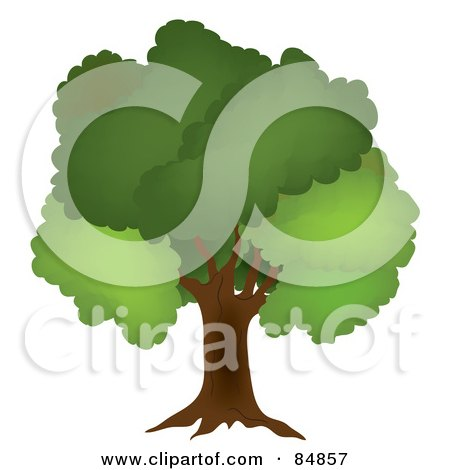 Royalty-Free (RF) Clipart Illustration of a Mature Oak Tree With Lush Green