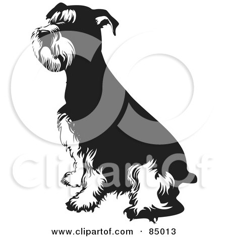 Royalty-Free (RF) Clipart Illustration of a Black And White Seated Schnauzer Dog by David Rey