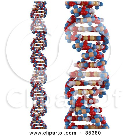Royalty-Free (RF) Clipart Illustration of a Digital Collage Of 3d Colorful Dna Strands Over White by Mopic