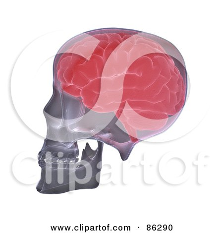 Royalty-Free (RF) Clipart Illustration of a Red Brain In A Human Skull by Mopic