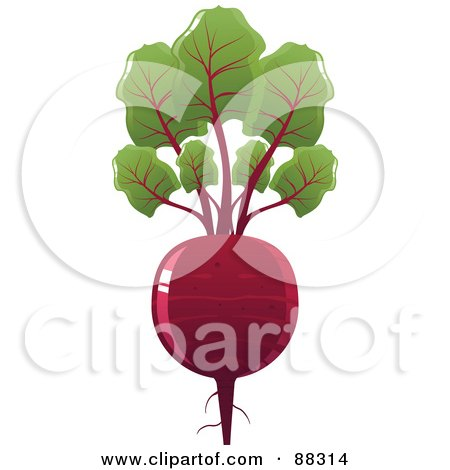 Shiny Red Beet With Leaves Posters, Art Prints