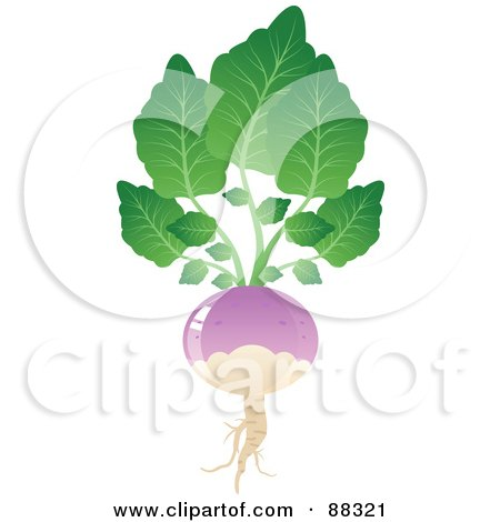 Royalty-Free (RF) Clipart Illustration of a Shiny Purple Turnip With Gree Leaves by Tonis Pan