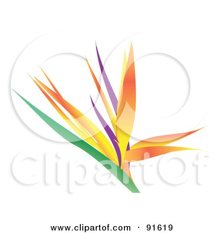 Royalty-Free (RF) Clipart Illustration of a Beautiful Bird Of Paradise Flower Over White by Arena Creative