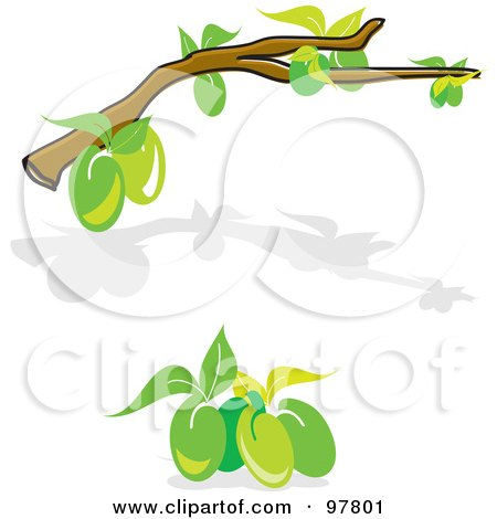 Royalty-Free (RF) Clipart Illustration of a Digital Collage Of An Olive Tree Branch And Shadow And A Cluster Of Green Olives by MacX